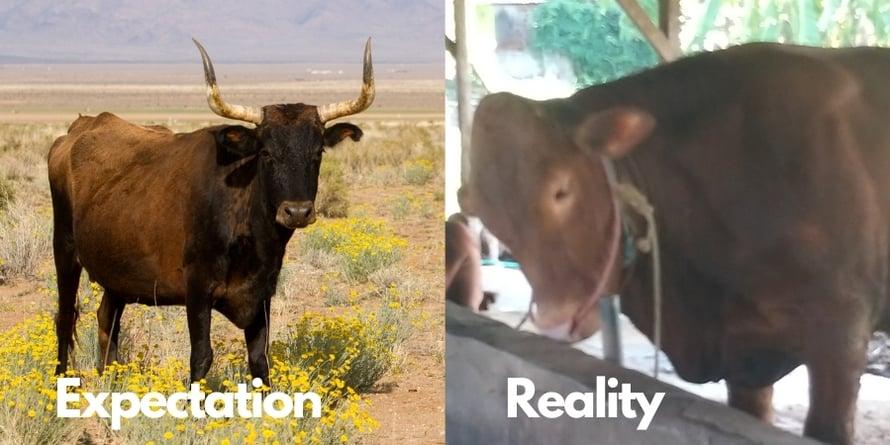Assuaged-Expectation-Reality-1