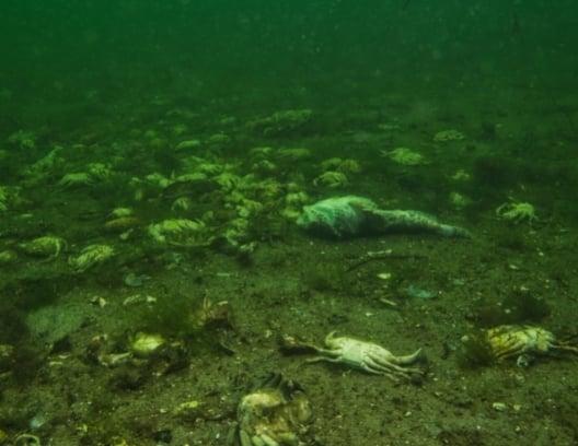 Assuaged-Ocean-Dead-Zone