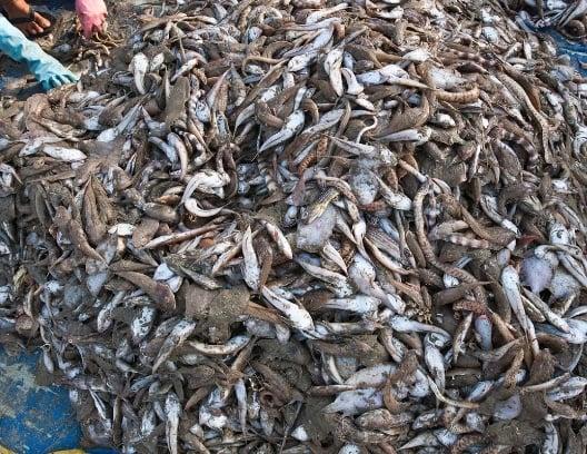 Assuaged-overfishing