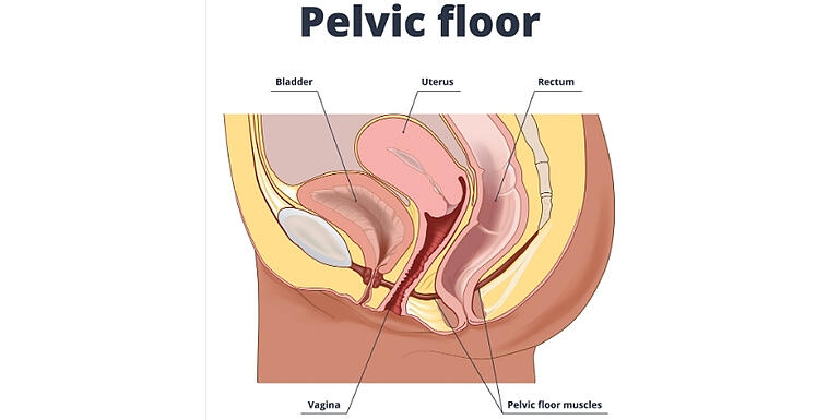 how-vaginal-dilators-and-pelvic-wands-help-with-painful-penetration 4
