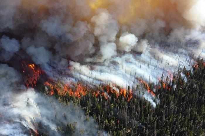 wildfires-consuming-the-forest-and-burning-the-land