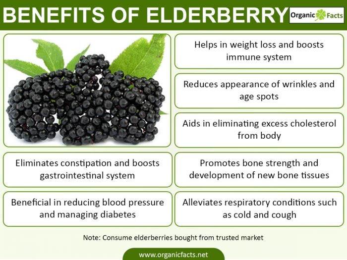 Elderber Ries Info