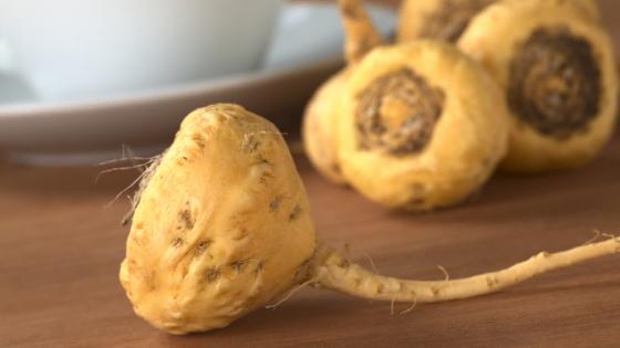 yellow maca root raw variety