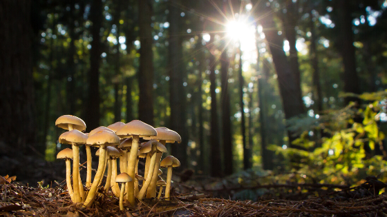 mushrooms in forest with sunlight fungi