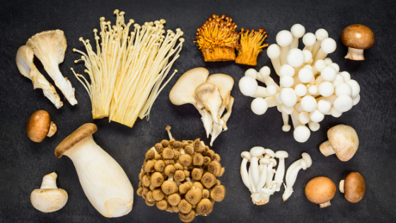 arrangement of different odd species of mushrooms and spores